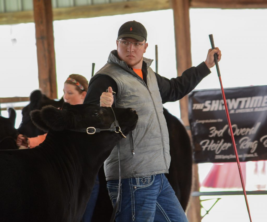 OSU student showing his steer at the county fair.