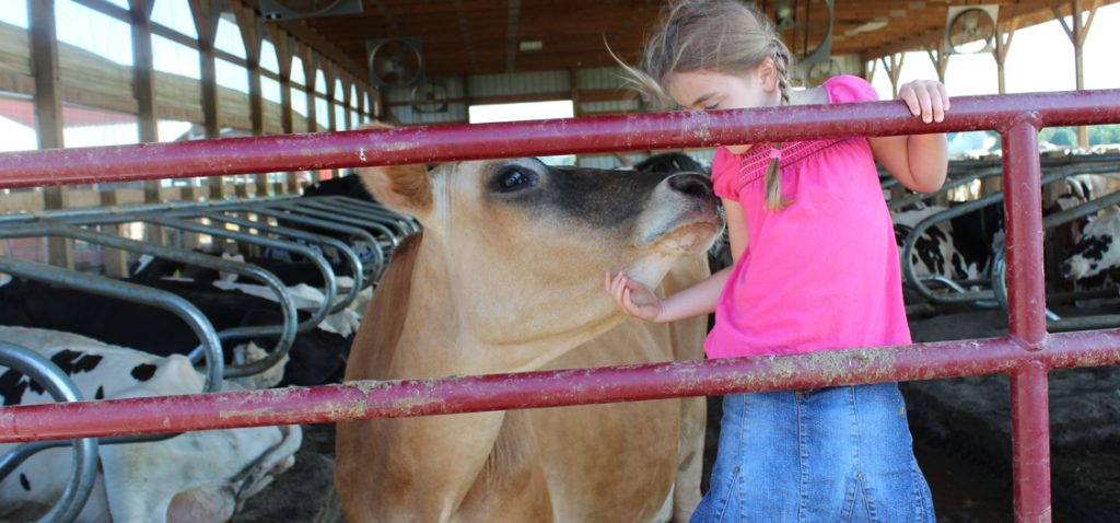 Young girl sharing some love with a jersey cow.